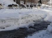 2011 Iditarod: Buser Still Leads, Mackey Second Into Takotna