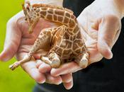 Petite Giraffes
