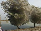 Pakistan Spiders Flee Floods Trees