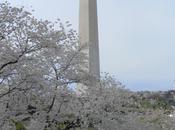 Cherry Blossoms Bloom, Washington Cherry, Pistachio Rose Water Macaroons Celebration