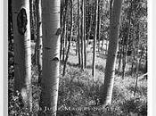 Aspen Light Black White