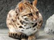Featured Animal: Leopard