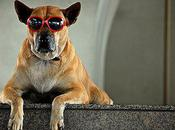 Dogs Shades