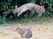 Easter Bunnies Jumpin', Leapin', Bouncin'