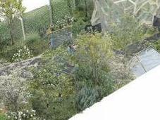 Times Eureka Garden Chelsea