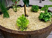 Herb Garden Must Haves!