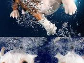 Super Cute Underwater Puppies
