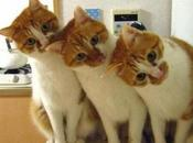 Images Three Cats Together