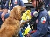 9/11 Ground Zero Search Still Lends Helping