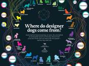 Infographic: Origins Designer Dogs