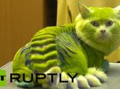 Weird Sensation Russia Makes Cats Look Like Dragons