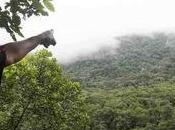 Historic Ruling Halts Mining, Returns 50,000 Hectares Indigenous Peoples Colombia