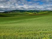 Wheat Fields Castilla León