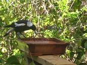 bird-feeder.I've Been Enjoying Birds