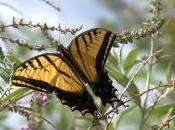 Butterflies Indicators Ecosystem Change