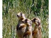 Endangered Species Regulations Ruled Unconstitutional Vermont Journal Environmental