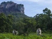 Miss Climbing Sigiriya Lanka