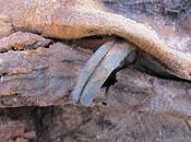 7-Feet-Tall Among Million Mummies Found Ancient Egyptian Cemetery