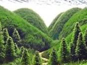 Driftwood Aquascapes