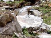 RUNDA Survival Mammal Kedarnath