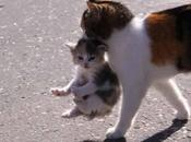 Mother's Love Among Animals