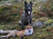 Unusual Unlike Animal Friendships
