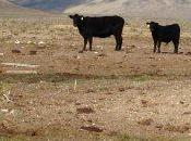 Benefits Removing Livestock from Rangelands Sequester Carbon