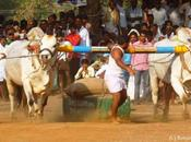 Wonder Bulls Ongole Racing