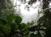 Withering Clouds: Climate Change Damaging Biodiverse Costa Rica Forest