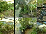 February Week 1...A Garden Visit