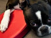Valentine's Doggy Dangers: Chocolate Sweet Canine Companion