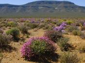 GBIF Collaborate Improving Biodiversity Information EurekAlert (press Release)