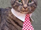 Photos: Festive Felines Share Love This Valentine's