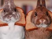 Funny Images Animal Breading