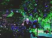 Wedding Series: Garden Lights