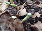 Garden Log, 3.11.15