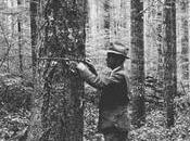 Cascades Study Rewrite Textbook Forest Growth Death