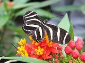 Butterflies Baja California
