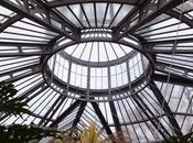 Palm Greenhouse Hortus Botanicus