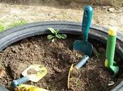 Garden Plans: Tyres Wood