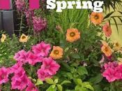 Designer Planters Spring