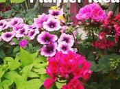 Window Planter Ideas