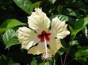 Flowers Borneo