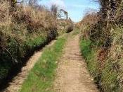 Walk Down Lane