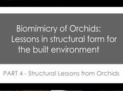 Biomimicry Orchids PART Structural Lessons from Orchid