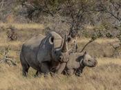 Extraordinary Extinct Species Last Century