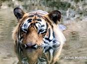 Wildlife India Perfectly Captured