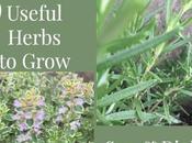 Most Useful Herbs Garden