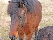 Close Nature Wild Horses Langeland