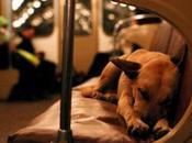 Subway Dogs Moscow